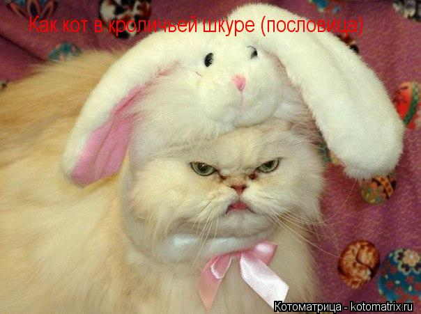 Котоматрица: Как кот в кроличьей шкуре (пословица)