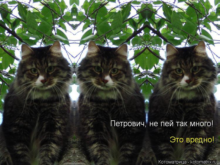 Котоматрица: Петрович, не пей так много!  Это вредно!