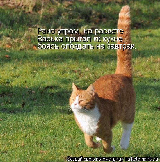 Котоматрица: Рано утром, на расвете Васька прыгал кк кухне  боясь опоздать на завтрак.
