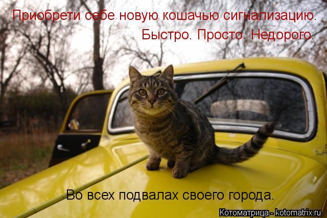 Котоматрица: Во всех подвалах своего города. Приобрети себе новую кошачью сигнализацию. Быстро. Просто. Недорого.