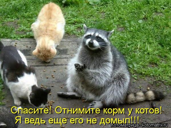 Котоматрица: Спасите! Отнимите корм у котов! Я ведь еще его не домыл!!!