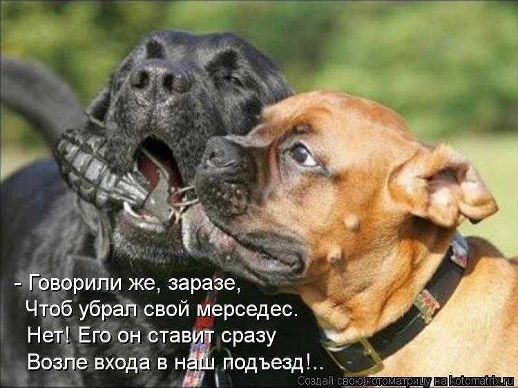 Котоматрица: - Говорили же, заразе, Чтоб убрал свой мерседес. Нет! Его он ставит сразу Возле входа в наш подъезд!..