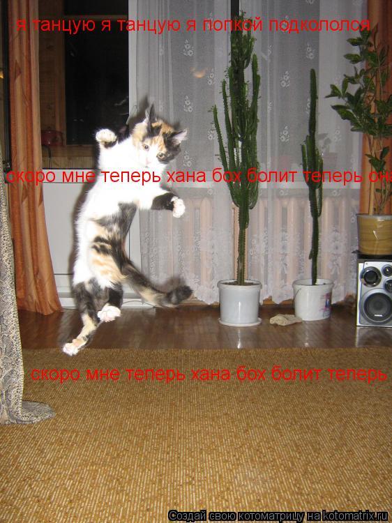 Котоматрица: я танцую я танцую я попкой подкололся скоро мне теперь хана бох болит теперь она! скоро мне теперь хана бох болит теперь она!