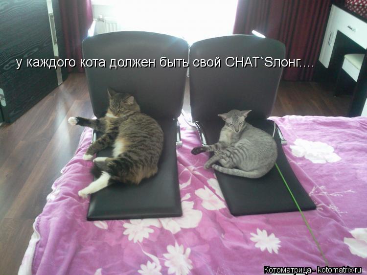 Котоматрица: у каждого кота должен быть свой CHAT`Sлонг....