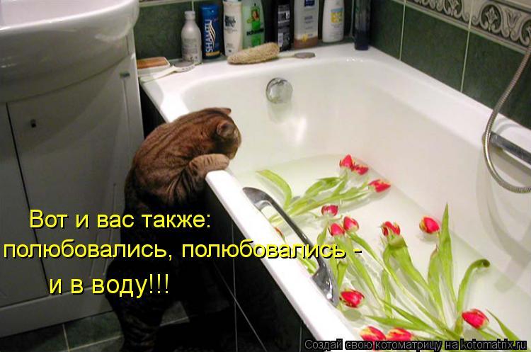 Котоматрица: Вот и вас также: полюбовались, полюбовались - и в воду!!!
