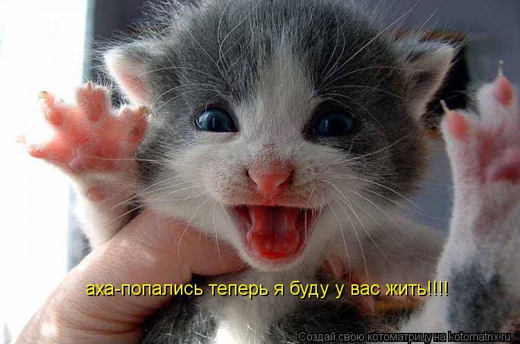 Котоматрица: аха-попались теперь я буду у вас жить!!!!