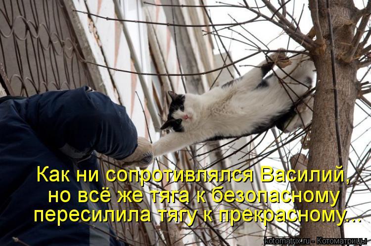 Котоматрица: Как ни сопротивлялся Василий, но всё же тяга к безопасному пересилила тягу к прекрасному...