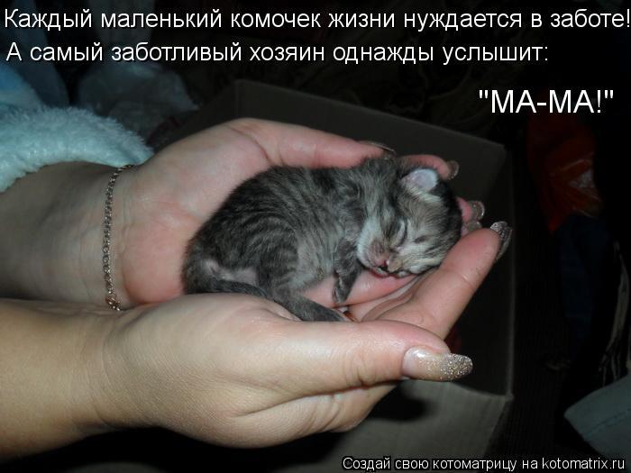 """Котоматрица: Каждый маленький комочек жизни нуждается в заботе! А самый заботливый хозяин однажды услышит: """"МА-МА!"""""""
