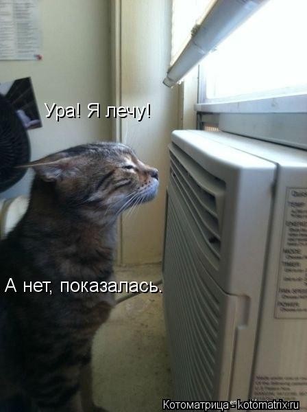 Котоматрица: Ура! Я лечу! А нет, показалась.