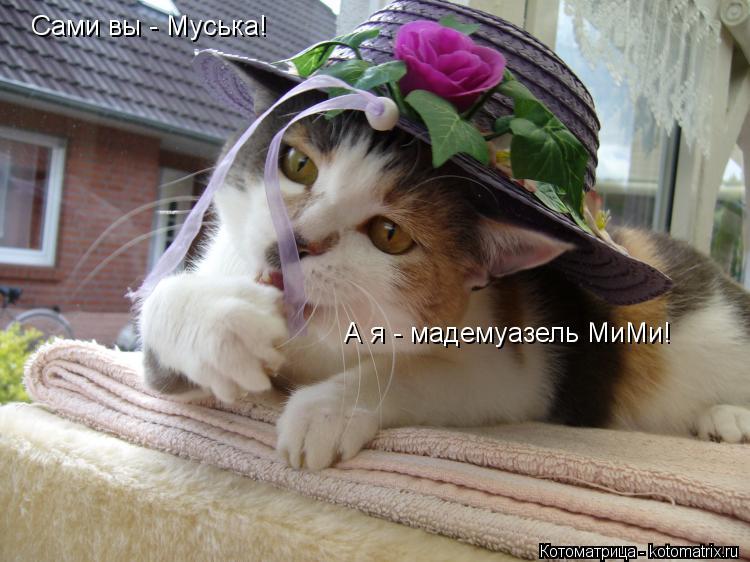 Котоматрица: Сами вы - Муська! А я - мадемуазель МиМи!