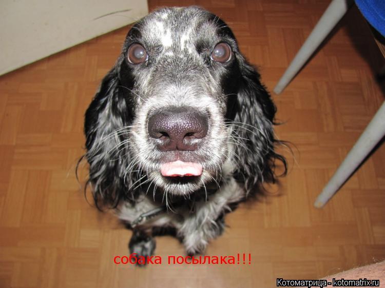 Котоматрица: собака посылака!!! собака посылака!!!