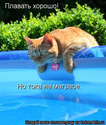 Котоматрица: Плавать хорошо! Но тока на матрасе.