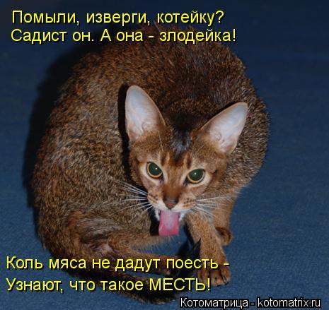 Котоматрица: Помыли, изверги, котейку? Садист он. А она - злодейка! Коль мяса не дадут поесть - Узнают, что такое МЕСТЬ!