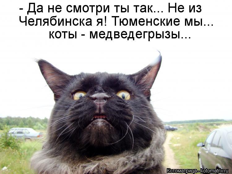 Котоматрица: - Да не смотри ты так... Не из Челябинска я! Тюменские мы... коты - медведегрызы...