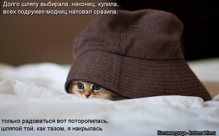 Котоматрица: Долго шляпу выбирала, наконец, купила, всех подружек-модниц наповал сразила, только радоваться вот поторопилась, шляпой той, как тазом, я на
