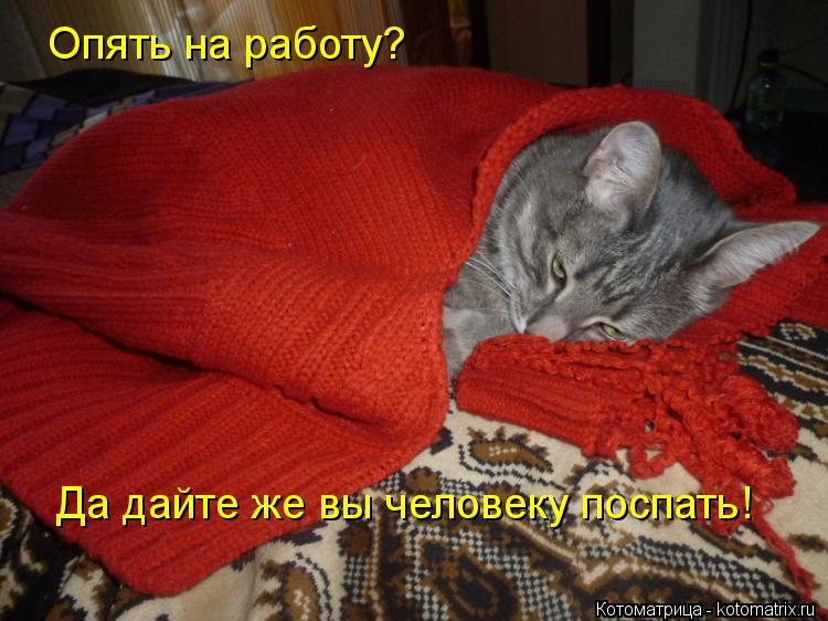 Котоматрица: Опять на работу? Да дайте же вы человеку поспать!