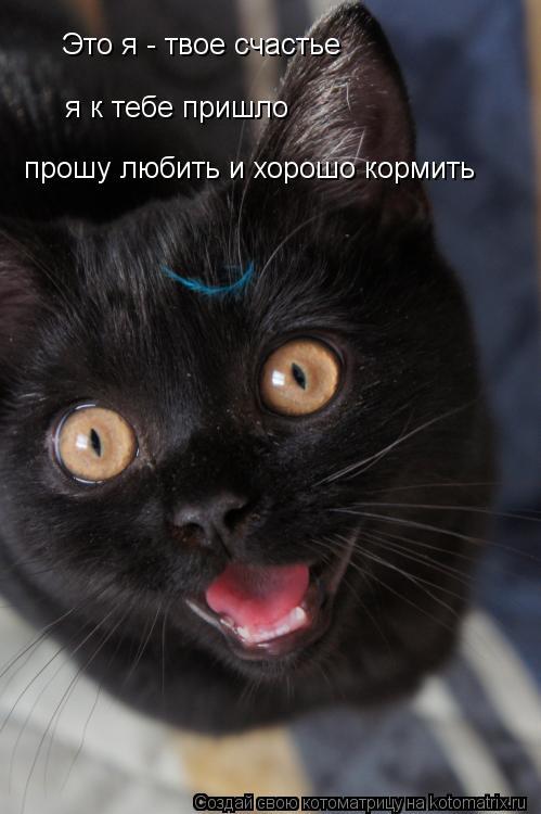 Котоматрица: Это я - твое счастье я к тебе пришло прошу любить и хорошо кормить