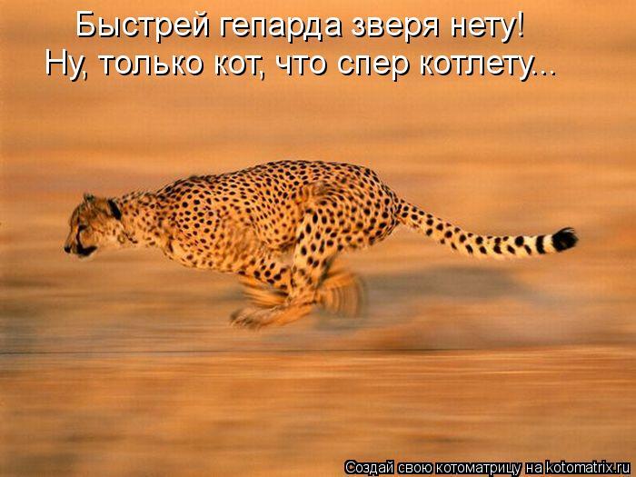 Котоматрица: Быстрей гепарда зверя нету! Ну, только кот, что спер котлету...