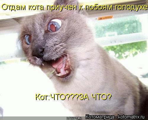 Котоматрица: Отдам кота приучен к побоям голодухе. Кот:ЧТО???ЗА ЧТО?