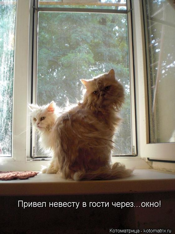 Котоматрица: Привел невесту в гости через...окно!