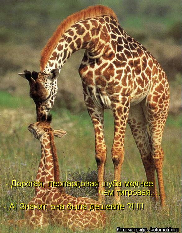 Котоматрица: - Дорогая, леопардовая шуба моднее, чем тигровая.... - А! Значит, она была дешевле ?!!!!!