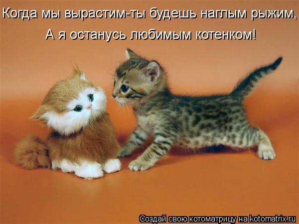 Котоматрица: Когда мы вырастим-ты будешь наглым рыжим, А я останусь любимым котенком!