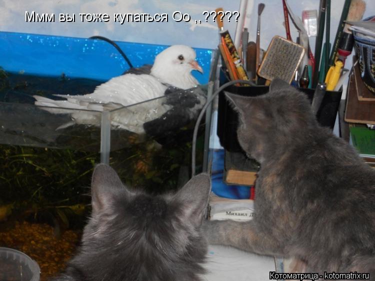Котоматрица: Ммм вы тоже купаться Oo ,,?????