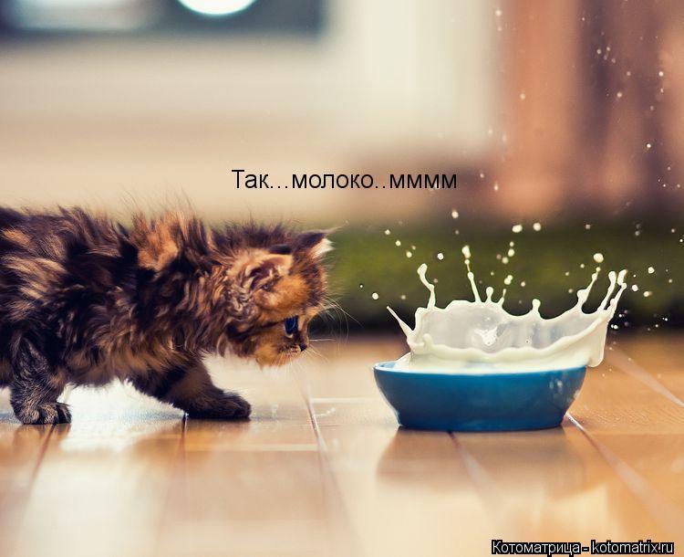 Котоматрица: Так...молоко..мммм