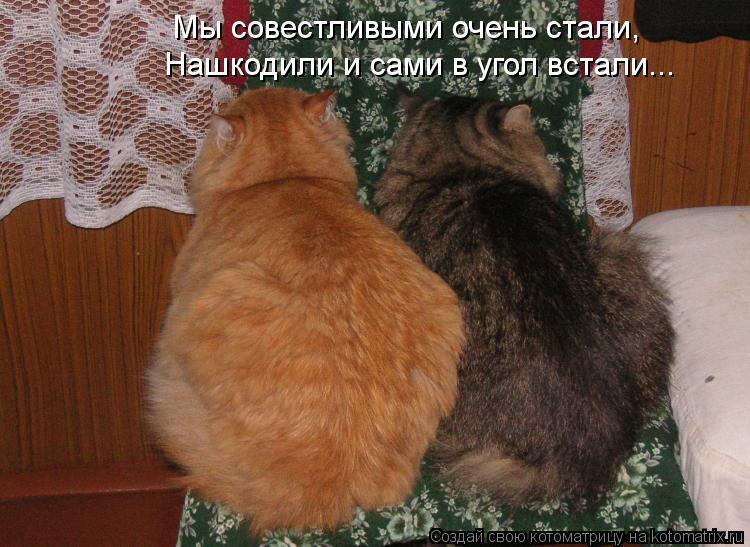 Котоматрица: Мы совестливыми очень стали, Нашкодили и сами в угол встали...