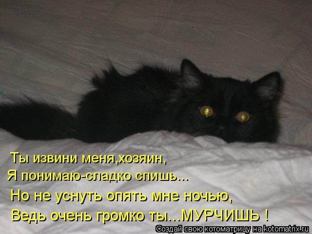 Котоматрица: Ты извини меня,хозяин, Я понимаю-сладко спишь... Но не уснуть опять мне ночью, Ведь очень громко ты...МУРЧИШЬ !