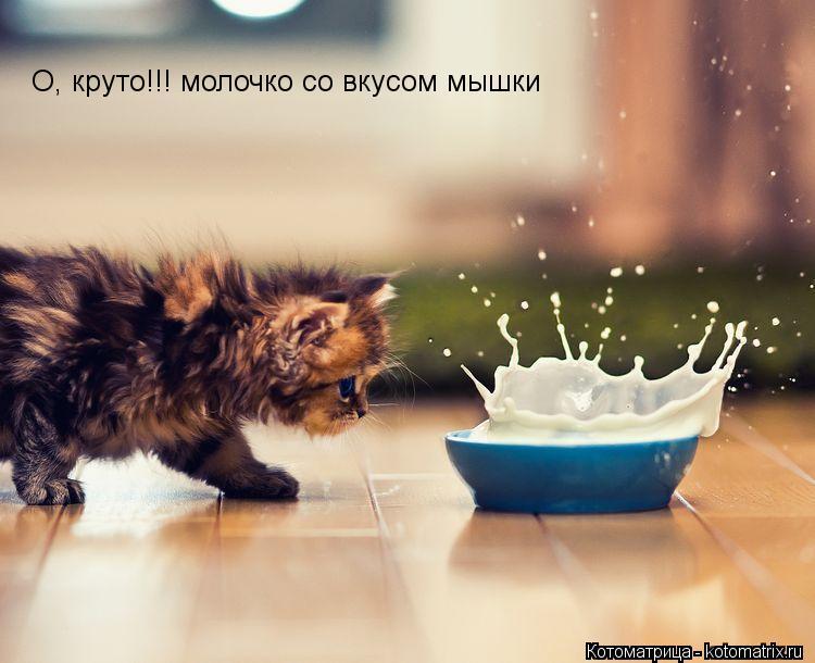 Котоматрица: О, круто!!! молочко со вкусом мышки