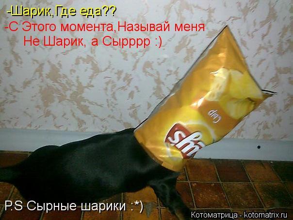 Котоматрица: -Шарик,Где еда?? -С Этого момента,Называй меня Не Шарик, а Сырррр :) Р.S Сырные шарики :*)
