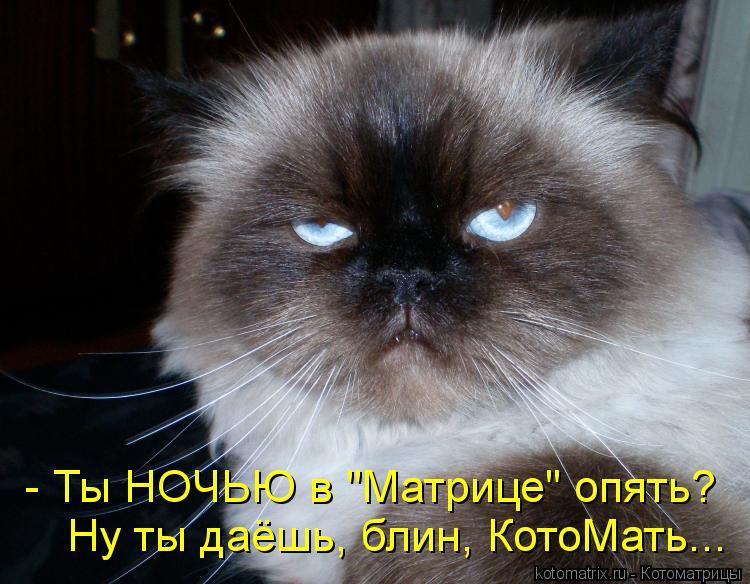"""Котоматрица: - Ты НОЧЬЮ в """"Матрице"""" опять? Ну ты даёшь, блин, КотоМать..."""