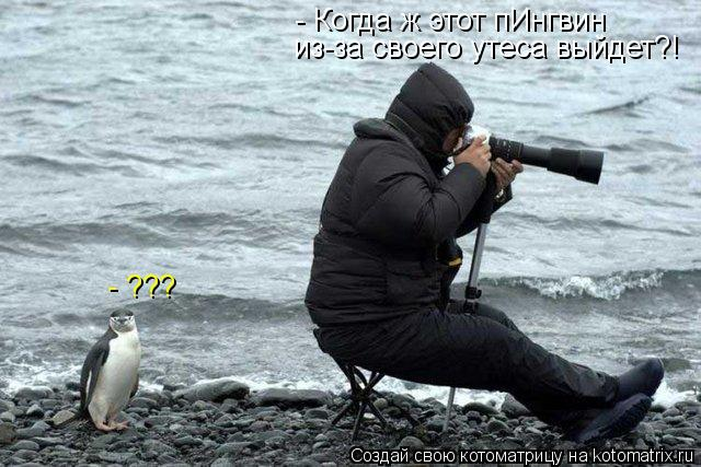 Котоматрица: - Когда ж этот пИнгвин из-за своего утеса выйдет?! - ???
