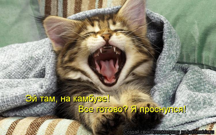 Котоматрица: Эй там, на камбузе!  Все готово? Я проснулся!