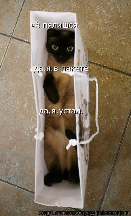 Котоматрица: чё пялишся да.я.в пакете  да.я.устал.