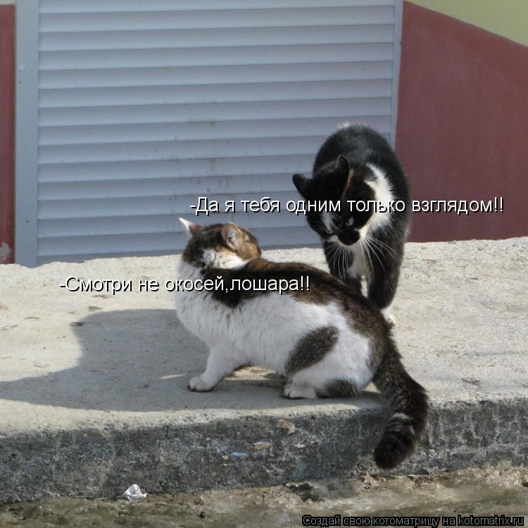 Котоматрица: -Смотри не окосей,лошара!! -Да я тебя одним только взглядом!!