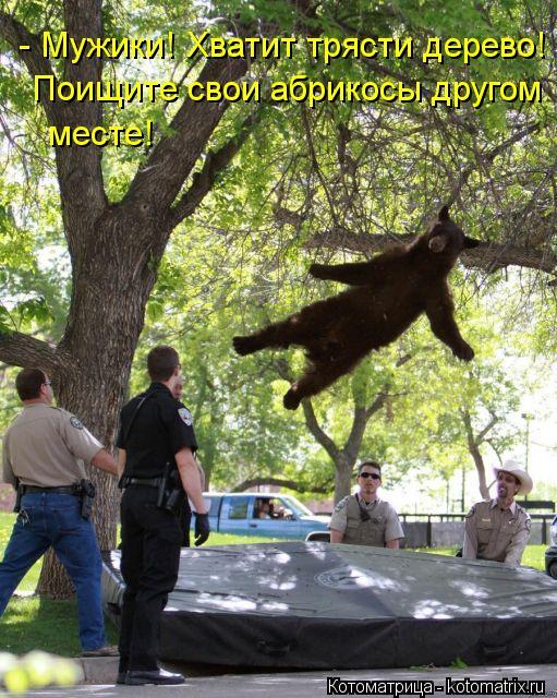Котоматрица: Поищите свои абрикосы другом - Мужики! Хватит трясти дерево! месте!