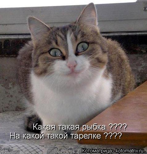 Котоматрица: Какая такая рыбка ???? На какой такой тарелке ????