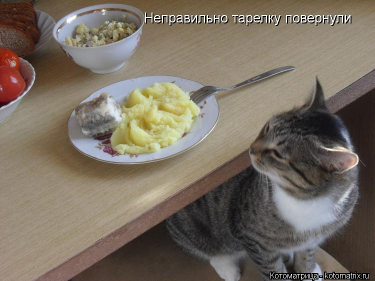 Котоматрица: Неправильно тарелку повернули