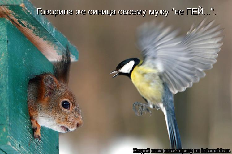 """Котоматрица: Говорила же синица своему мужу """"не ПЕЙ...""""."""