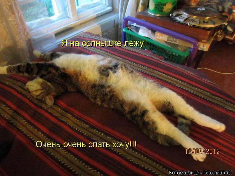 Котоматрица: Я на солнышке лежу! Очень-очень спать хочу!!!