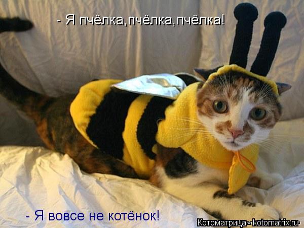 Котоматрица: - Я пчёлка,пчёлка,пчёлка! - Я вовсе не котёнок!