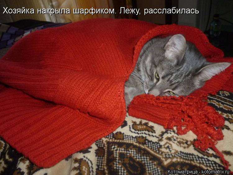 Котоматрица: Хозяйка накрыла шарфиком. Лежу, расслабилась Хозяйка накрыла шарфиком. Лежу, расслабилась