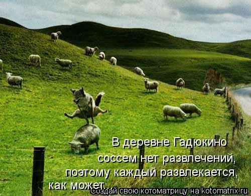 Котоматрица: В деревне Гадюкино  соссем нет развлечений, поэтому каждый развлекается, как может...