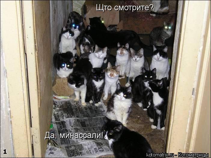 Котоматрица: Щто смотрите? Да, минассали!