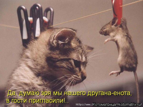 Котоматрица: Да, думаю зря мы нашего другана-енота,  в гости пригласили!..