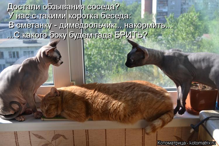 Котоматрица: Достали обзывания соседа? У нас с такими коротка беседа: В сметанку - димедрольчик... накормить... ...С какого боку будем гада БРИТЬ?
