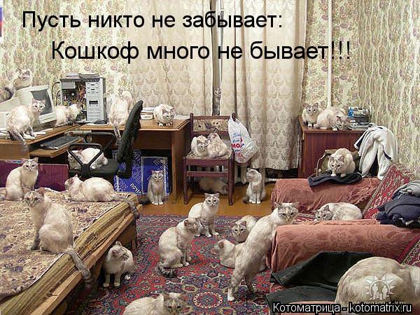 Котоматрица: Пусть никто не забывает: Кошкоф много не бывает!!!