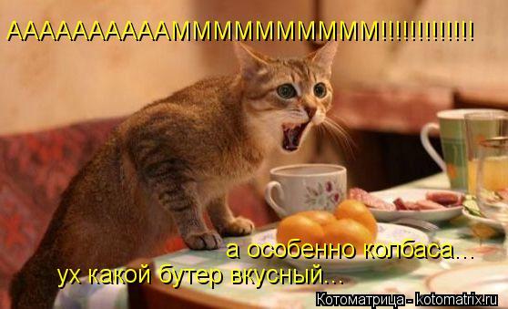 Котоматрица: ААААААААААММММММММММ!!!!!!!!!!!!! ух какой бутер вкусный... а особенно колбаса...